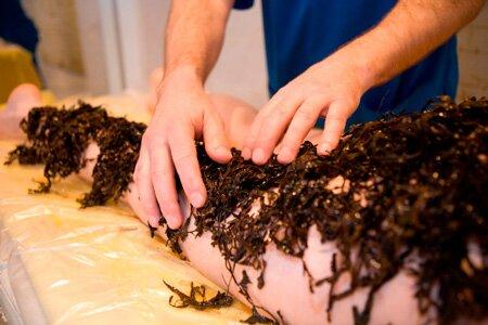 Горячее или холодное обертывание водорослями – какое выбрать?