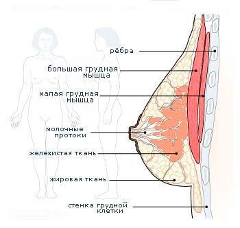 Упражнения для груди: для увеличения и придания привлекательной формы